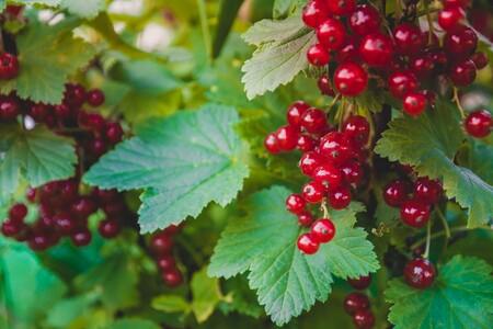 Redescubre la grosella, una diminuta baya saludable y deliciosa: características, propiedades y recetas para disfrutarla