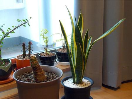 Nueve consejos para mantener tus plantas en casa
