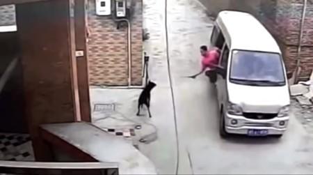Secuestro de perros