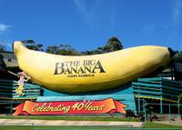 Gran banana, Coffs Harbour