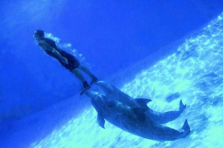 Arranca la experiencia de ir a pasar las noches de verano al Zoo Aquarium de Madrid