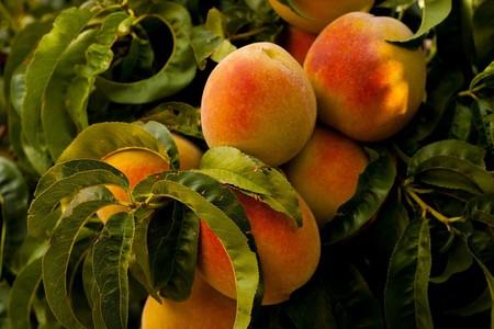 Peaches 869386 1280
