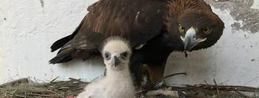 El listado de animales en peligro de extinción en México no se ha actualizado desde 2010 y se basa en información de los 90