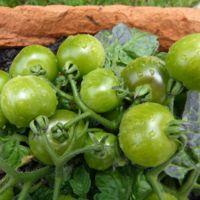 El huerto urbano: una ensalada en tu balcón