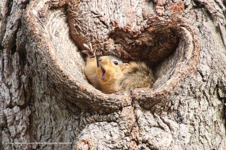 Corey Seeman Who Would Like A Peanut Squirrels At The University Of Michigan 00003651