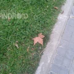 Foto 28 de 33 de la galería fotos-tomadas-por-el-samsung-galaxy-siii-mini en Xataka Android
