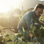 ¿Merece la pena pagar tanto por los alimentos ecológicos? Por éstos, en concreto, sí