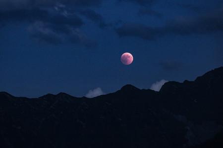Embrujo lunático: los eclipses provocan que los animales tengan comportamientos extraños
