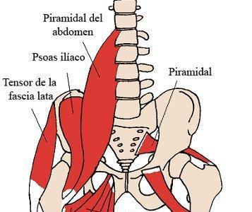 Aductores del muslo: músculos olvidados en el entrenamiento