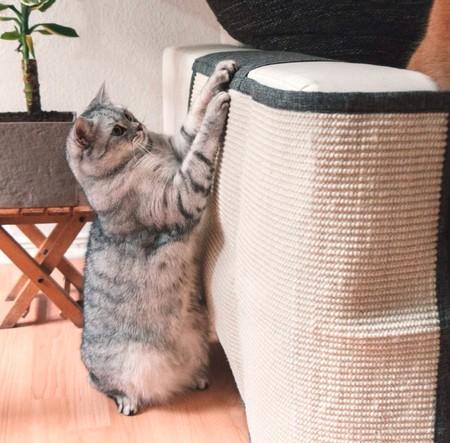Protector Muebles Mascotas 9