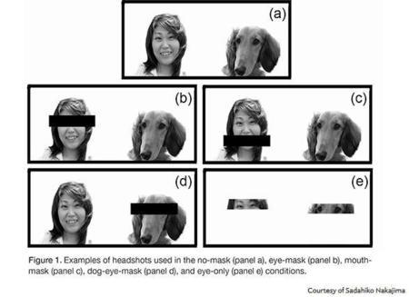 perros-duenios.jpg