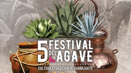 Festival Agave