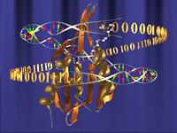 ¿Qué hace un bioinformático?