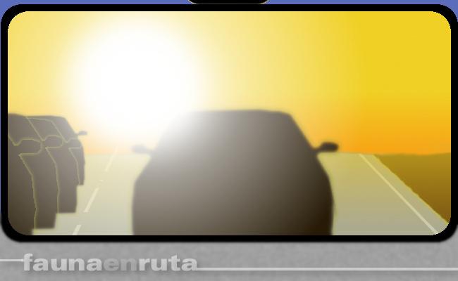 fauna en ruta: deslumbramiento con el sol