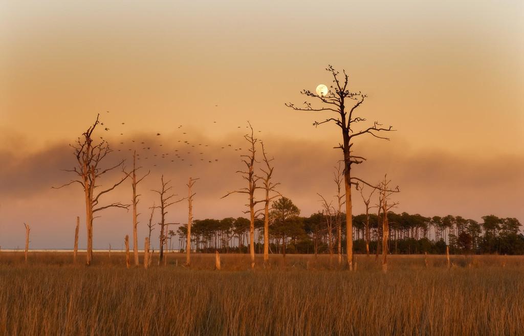 Los inquietantes bosques fantasmas de la costa este de Maryland