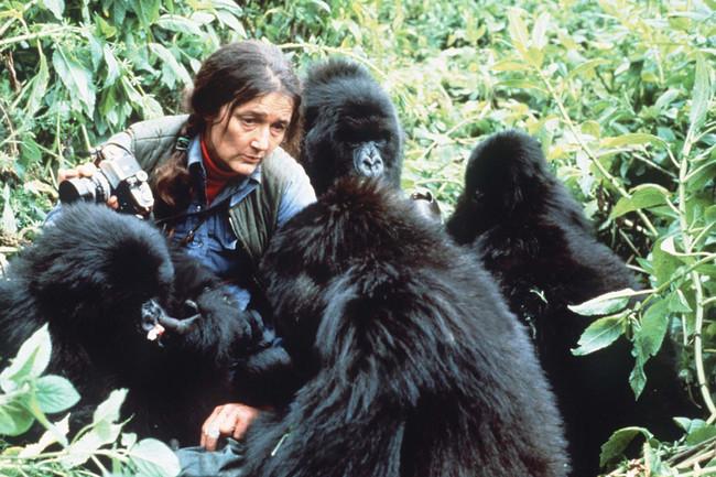 dian-fossey-gorilas