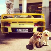 Supercarpups, esos dos perritos que posan con los coches de tus sueños