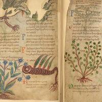 Este precioso manuscrito de 1.000 años te permite pasear por centenares de remedios herbales medievales