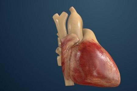Una réplica exacta de cualquier corazón, siguiente paso en la guerra contra los infartos