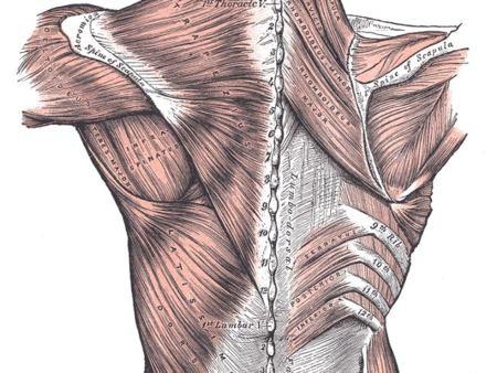 Vitónica respónde: ¿qué ejercicios realizar para ensanchar la espalda?