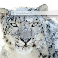 Dos trucos para Spotlight en el Mac: buscar en Safari y localizar rutas de archivo