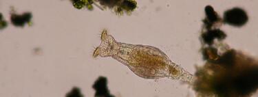 Esta microscópica criatura ha sobrevivido 24.000 años a la congelación en el permafrost siberiano