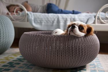Cozy Pet Knit, porque tu mascota ocupa en tu hogar un lugar muy especial