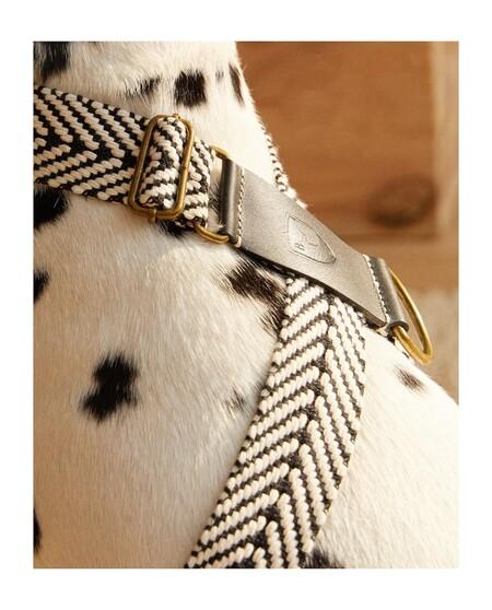 Zara Home Mascotas 8