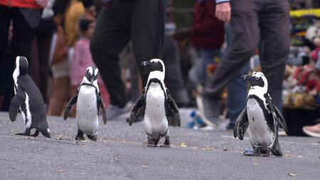Colonia Pinguino