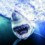 'Sharks', de Michael Muller, un libro del fotógrafo que lo mismo retrata a estrellas de Hollywood que a tiburones