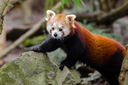 17 animales absurdamente monos que están al borde de la extinción