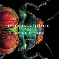 Los insectos también pueden ser obras de arte