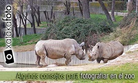 Fotografiar en el zoo y reservas de animales
