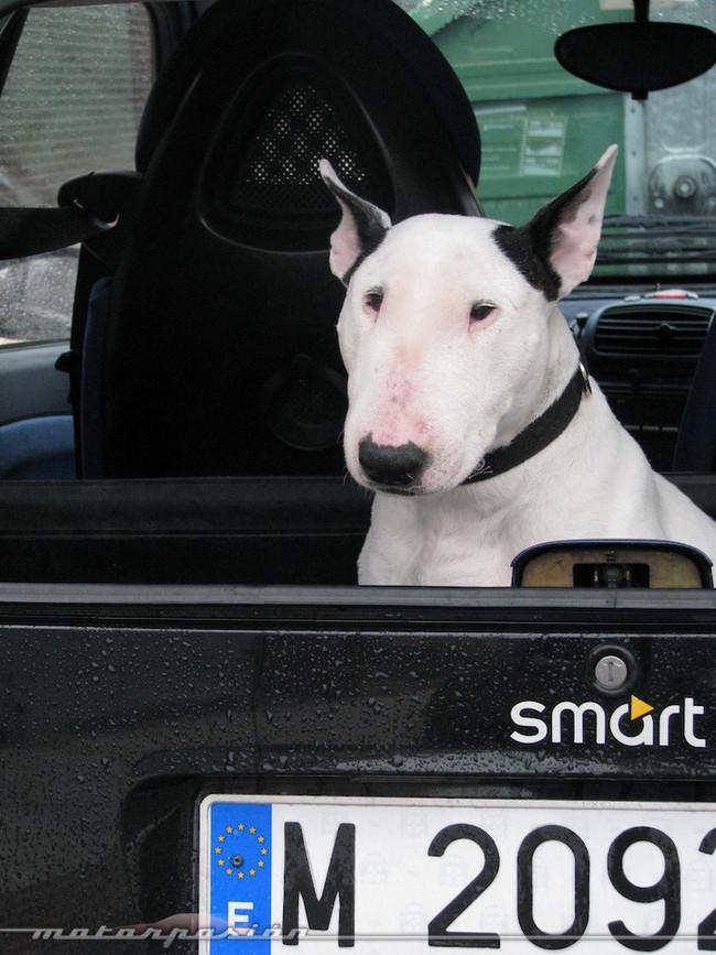 Foto de Transporta correctamente a tu mascota (5/11)
