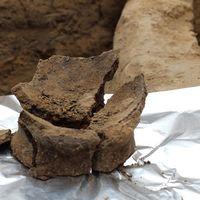 Éste es el vino más antiguo y tiene 8000 años