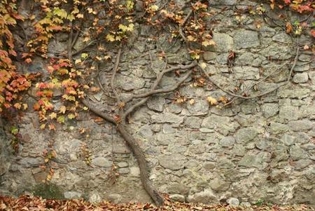 ¿Nos enseñas tus fotografías de este otoño?: La pregunta de la semana