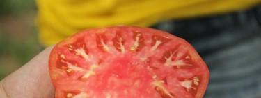 El delicioso tomate rosado o de piel de doncella