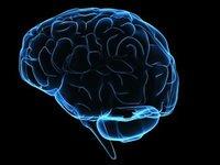 Los 4 procesos cerebrales que determinan nuestra moral