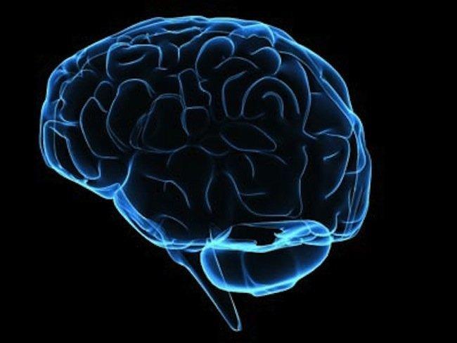 brain-1.jpg