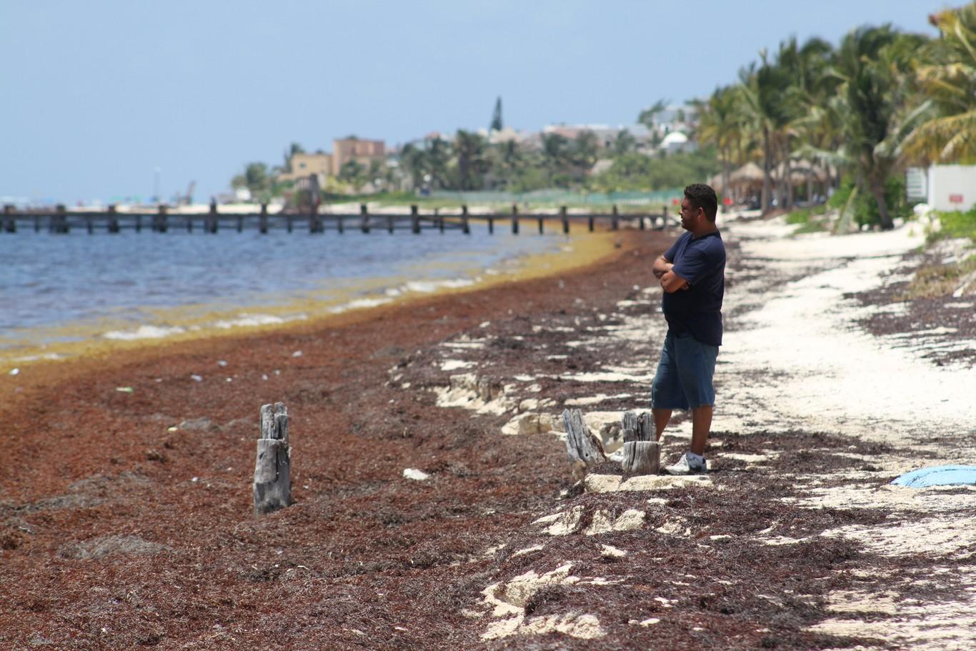 """Ya hay declaratoria de emergencia en Quintana Roo por sargazo: es un """"inminente desastre natural"""" dice..."""
