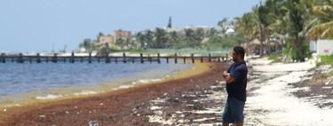 """Ya hay declaratoria de emergencia en Quintana Roo por sargazo: es un """"inminente desastre natural"""" dice gobierno local"""