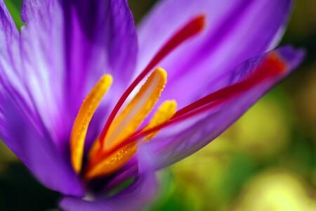 Azafran Flor