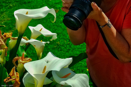 Trucos Mejores Fotos Flores 04