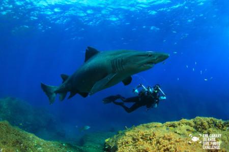 Éstas son las imágenes vencedoras del certamen 'The Canary Islands Dive Photo Challenge'