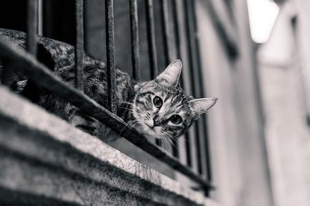 Como Fotografiar Mascotas I Gatos 5