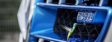 'Fábricas' de hidrógeno de una décima de milímetro a partir de algas vivas, el último logro para generar hidrógeno verde