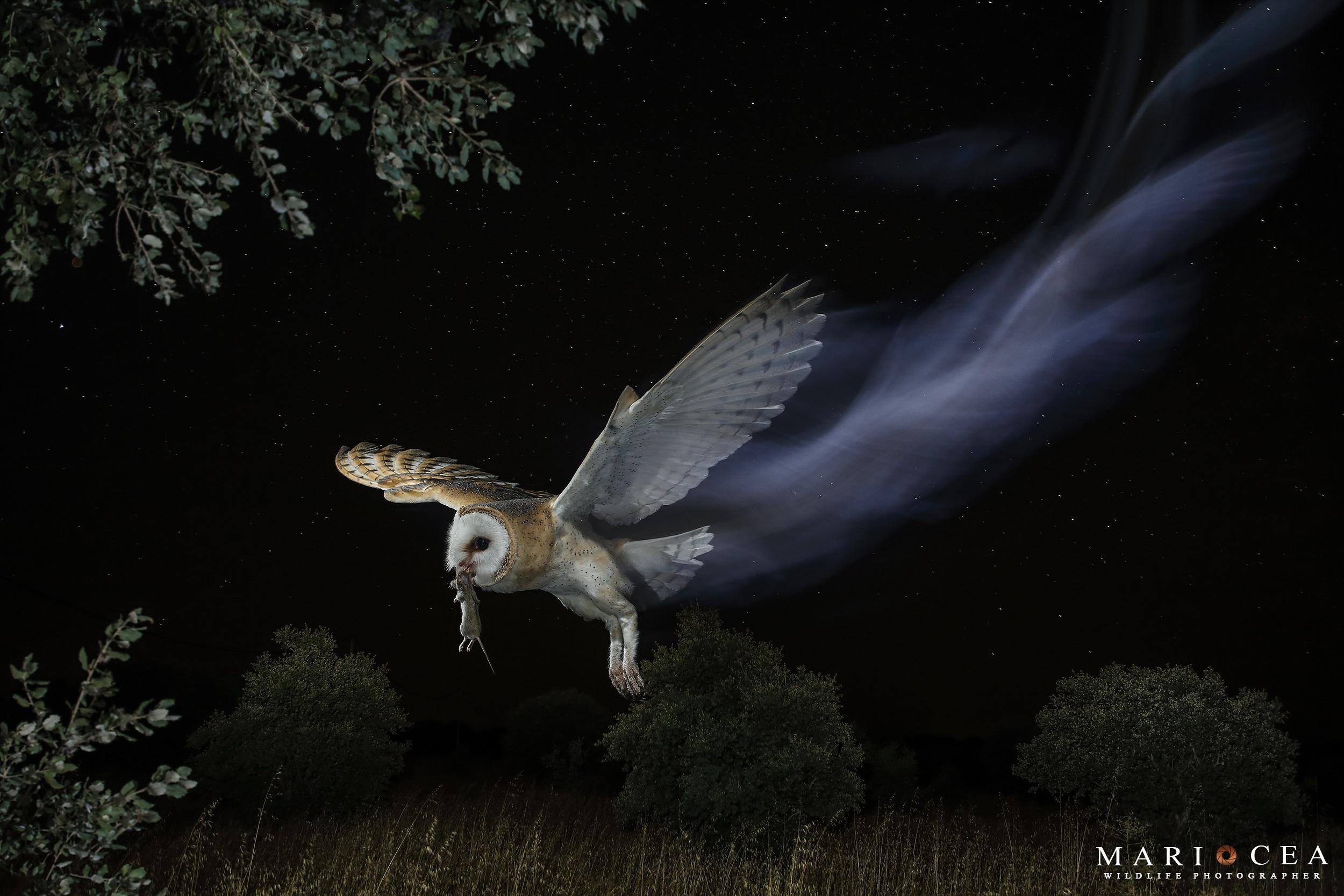 Foto de Fotografías de naturaleza tomadas por Mario Cea (10/12)