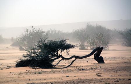 Tormenta arena Desierto En Toyota 4x4