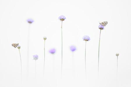 R Emelin Dupieux Butterflies In The Light Cupoty