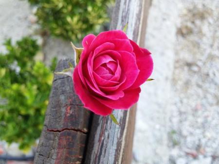 Flor con LG G3